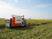 米の収穫風景
